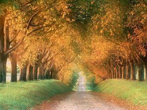 Làm sự công nghĩa, yêu mến lòng nhân từ và khiêm nhường bước đi với Chúa Trời ngươi