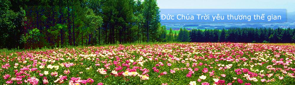 Việt Ngữ Tin Lành (www.vietngutinlanh.com)