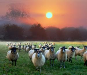 Ta đến để cho bày chiên được sự sống dư dật