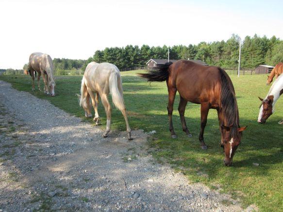 Horses 02